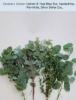 Option 3: True Blue Euc, Seeded Euc, Parvifolia, Silver Dollar Euc.
