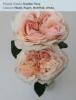 Garden Rose - Blush, Peach, Hot Pink, White